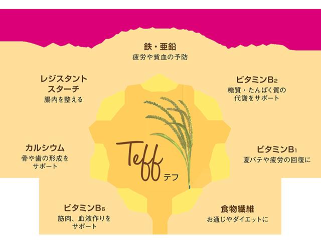 テフが含む栄養素イメージ